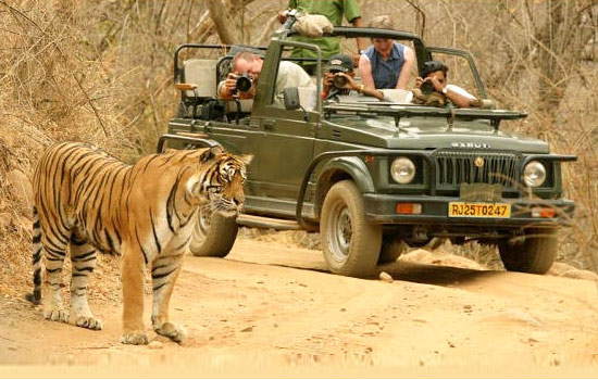 Wildlife Tours