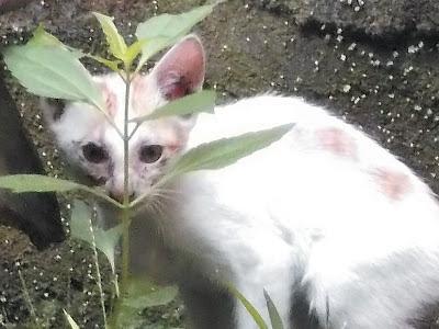 Foto-Foto Anak Kucing Lucu di Luar Jendela Kamar Kost Gue