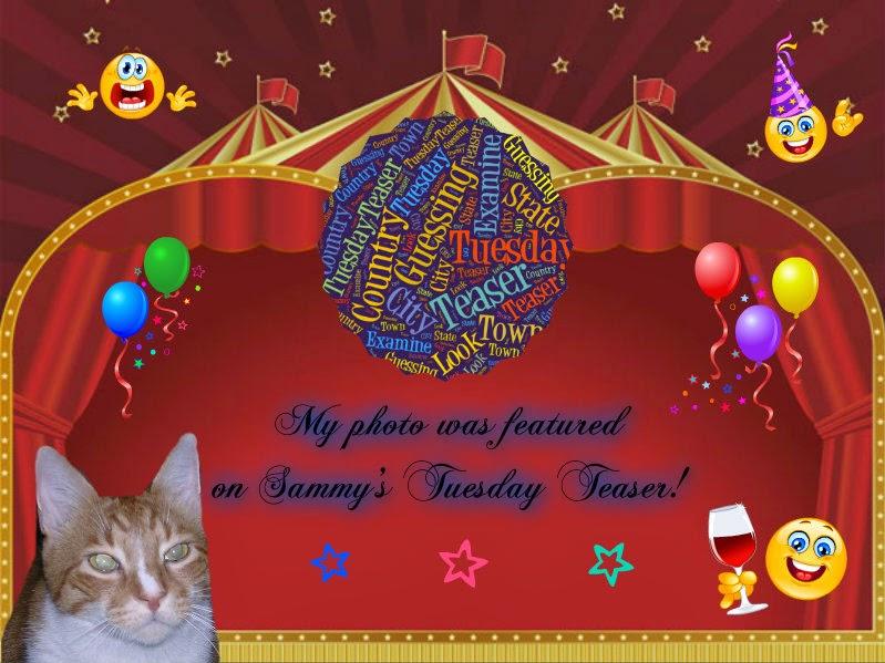 Sammy's Tuesday Teaser