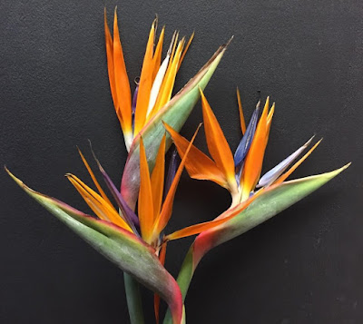 Birds of Paradise - Stein Your Florist Co.