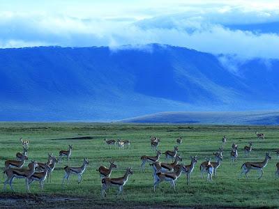 Ngorongoro Wild life Conservative Area Tanzania Africa