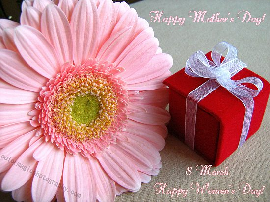 Mother's Day greeting card with gerbera and small giftbox-from colormagicphotography.com