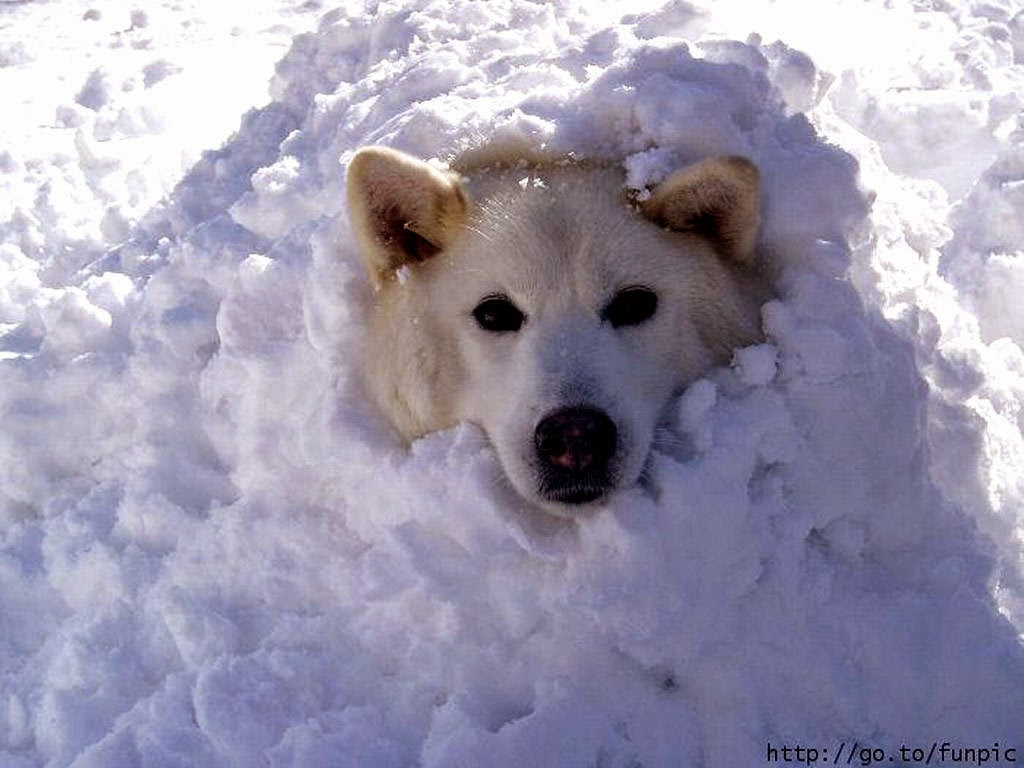 pets, pet safety tips, pets cold weather, snow dog