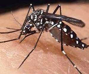 Symptoms and Remedies of Dengue Fever