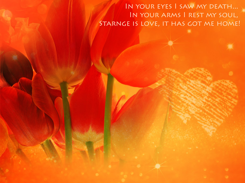 Sweet Hot Love Wallpaper : Sweet Love Quotes Wallpapers