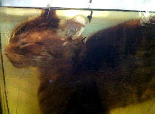 Pet Cat Clone Exhibit - Grant Museum of Zoology Field Trip London - Arts Award Bronze Level Art Portfolio Ideas