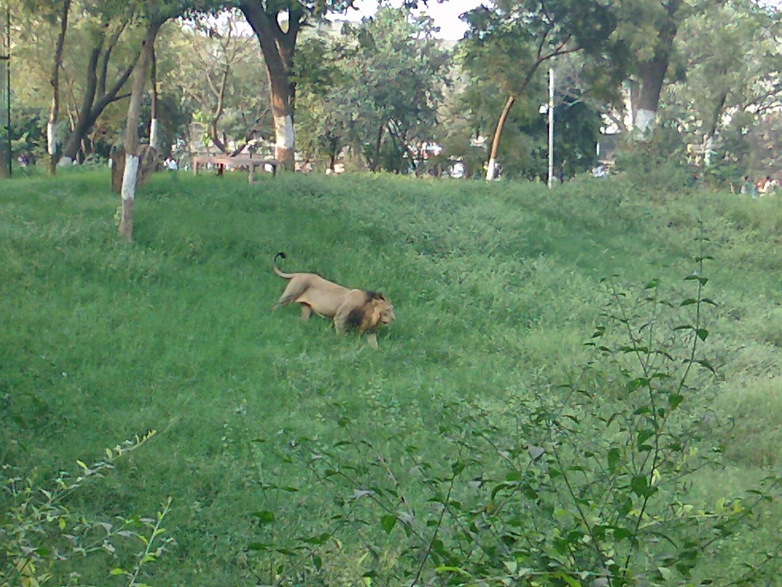 lion cage kankaria zoo