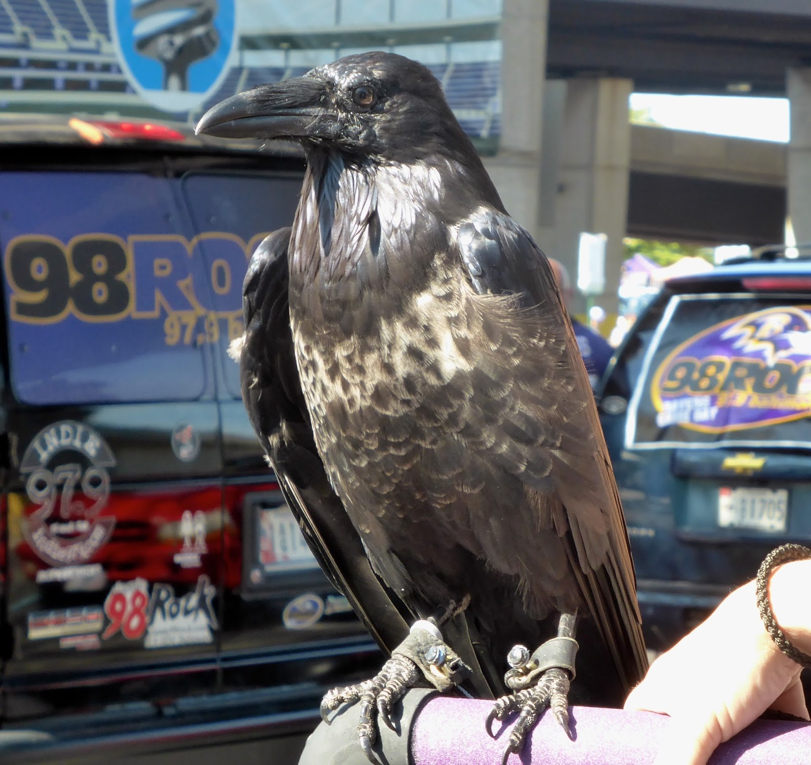 Sports Road Trips Cleveland Browns 6 At Baltimore Ravens