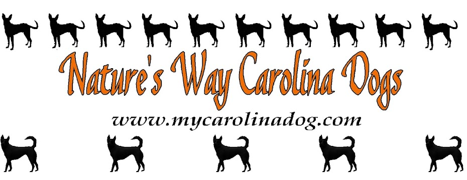 Nature's Way Carolina Dogs