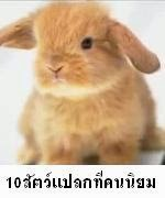 10 อันดับสัตว์แปลกที่คนไทยนิยมเลี้ยงมากที่สุด กระต่าย