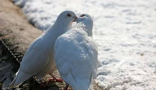 Romantis - Biarkan Cinta Menguasai Dunia - the facemash post