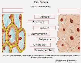 http://diefantastischen5.blogspot.com/2014/08/zellen-klasse-6.html