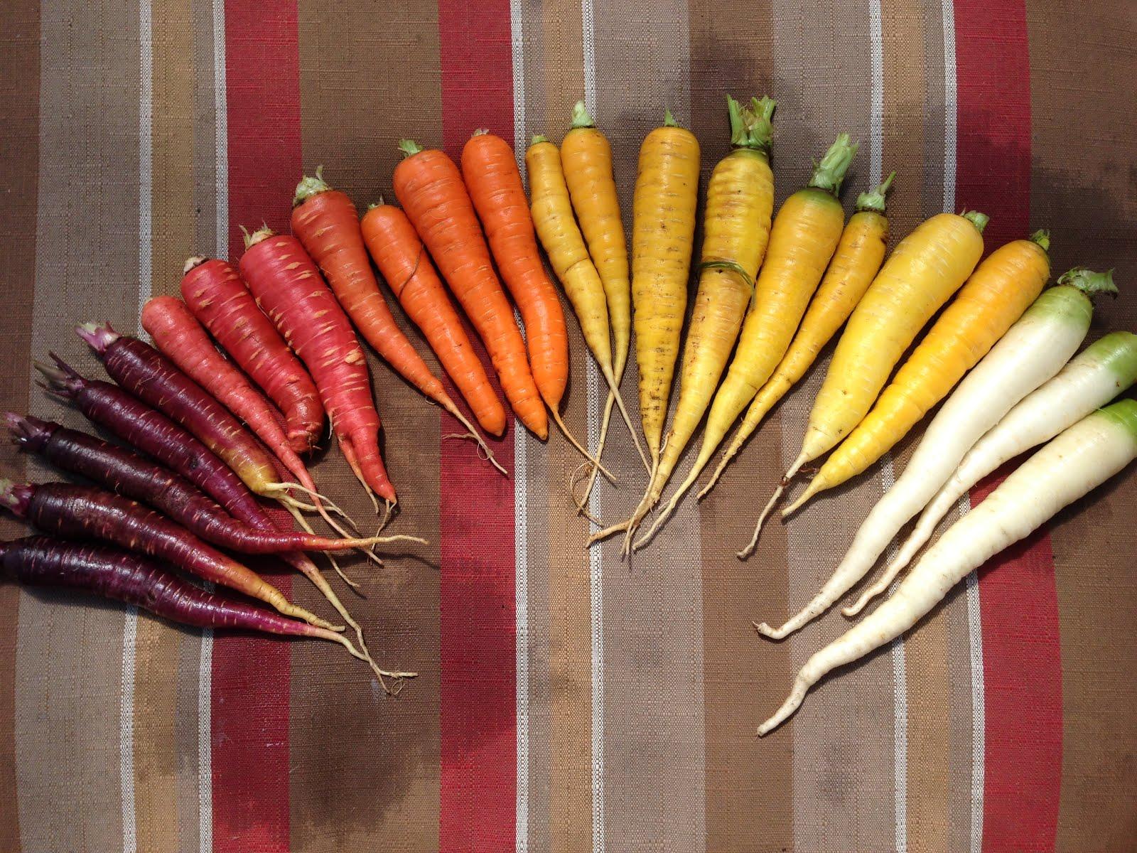 Summer Harvest 2014