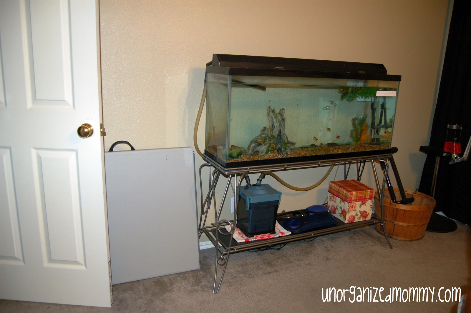 Fish tank bedroom wall for Bedroom fish tank