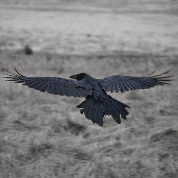 Raven Flight Nude Photos 54