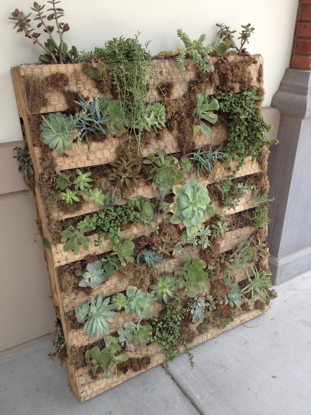within my means pallet succulent garden