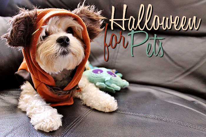 Nora the Morkie as an Ewok for Halloween #TrickOrTreatEm #Shop