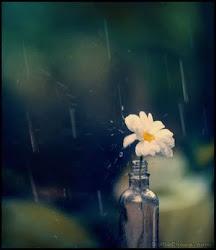 que la vida son dos días y uno llueve.