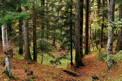 Image of autumn colors in mountain forest