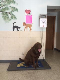 Dog Boarding Hermann Mo