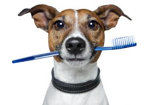 Cần chú ý tới việc chăm sóc răng miệng cho cún.