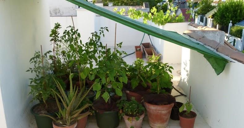 El macetohuerto presentaci n del nuevo macetohuerto de for Jardineria ecologica