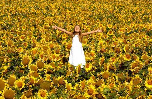 van gogh sunflowers wallpaper