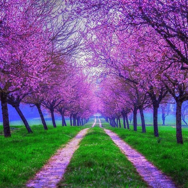 Wallpapers com belas paisagens maravilhosas florestas