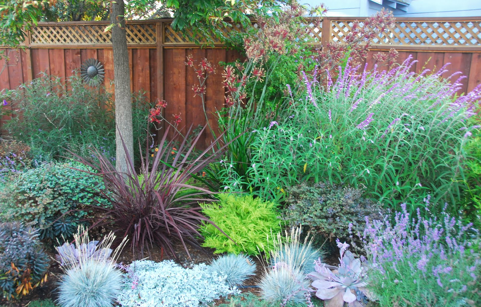 Waterwise Garden Design astrid gaiser garden design: lilac lawns – or why water-wise rocks