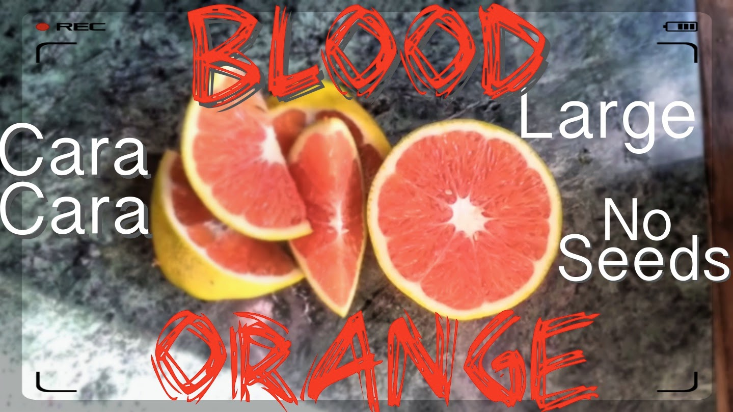 Blood Orange Tree - The Cara Cara Large