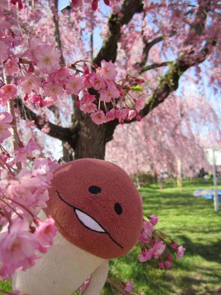 Hirosaki Castle Park Honmaru (paid area) 弘前公園 本丸 有料区域