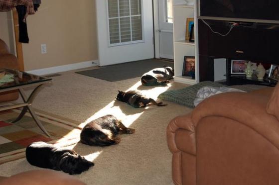 cachorrinhos  no sol