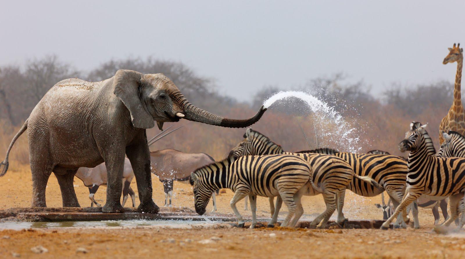 http://2.bp.blogspot.com/-DcIoiDfw5f8/UG5GcZxkleI/AAAAAAABKw4/dbUOlkH-t7c/s1600/elefante-y-cebras-animales-de-la-sabana-.jpg