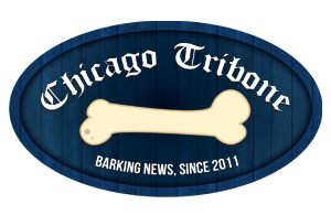 Chicago Tribone