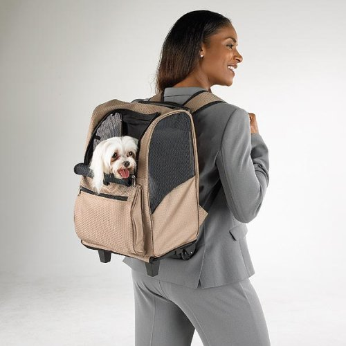 Small dog carrier backpack hiking dog breeds picture