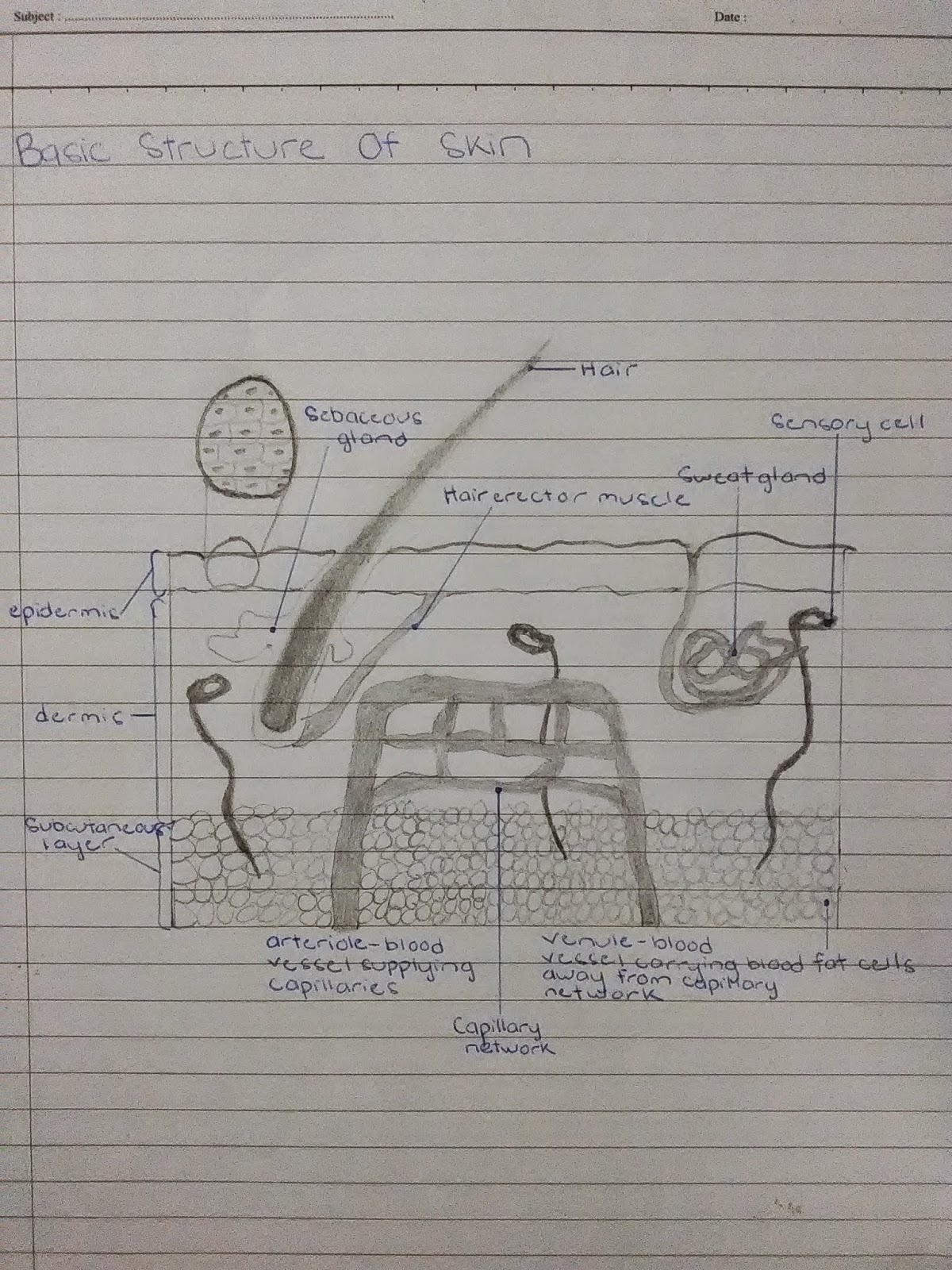 Environmental Health Student Blog Functions Of Integumentary System