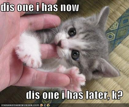 Cute Funny Kittens Captions
