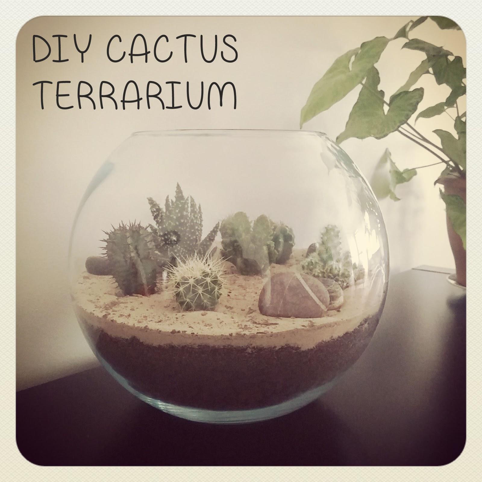 funky sunday mon petit coin de d sert diy cactus terrarium. Black Bedroom Furniture Sets. Home Design Ideas