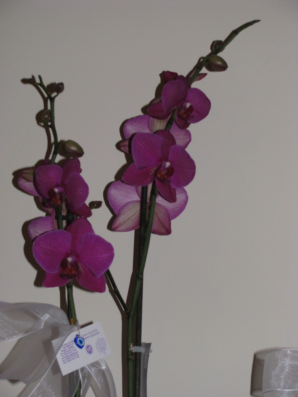 Orkide ortası vardı: ne yapmalı ve onlardan nasıl kurtulacak