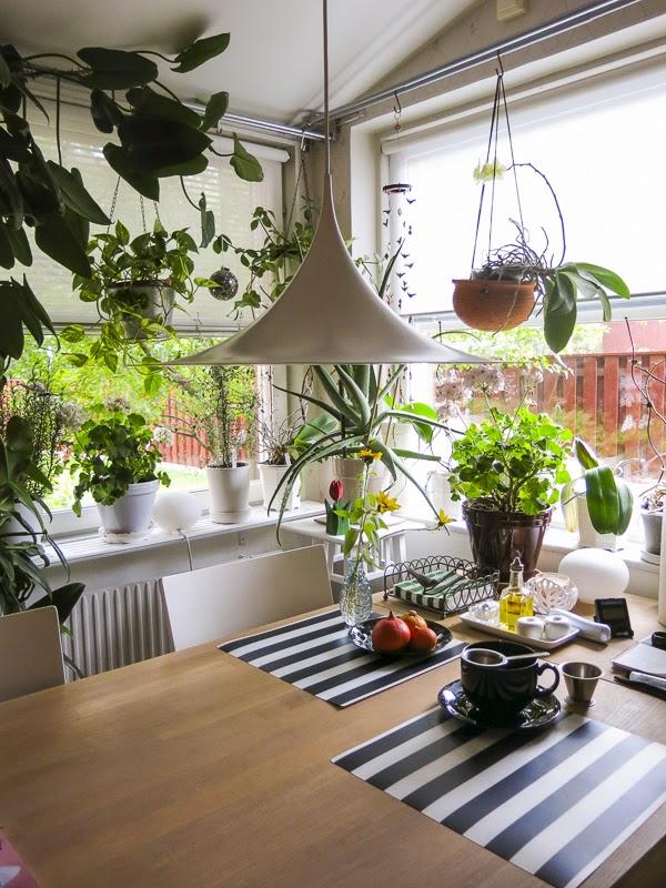 blommor, köksfönster, taklampa