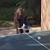 Cachorro joga tênis de mesa e chama a atenção no YouTube