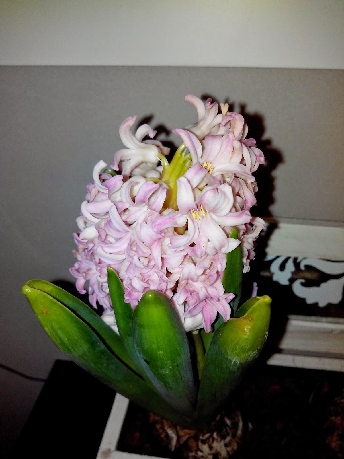 fleurs, bullelodie