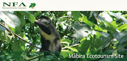 Mabira Ecotourism Site