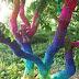 247 Jaring Laba-Laba Warna-Warni Hiasi Sebuah Pohon di Hongaria