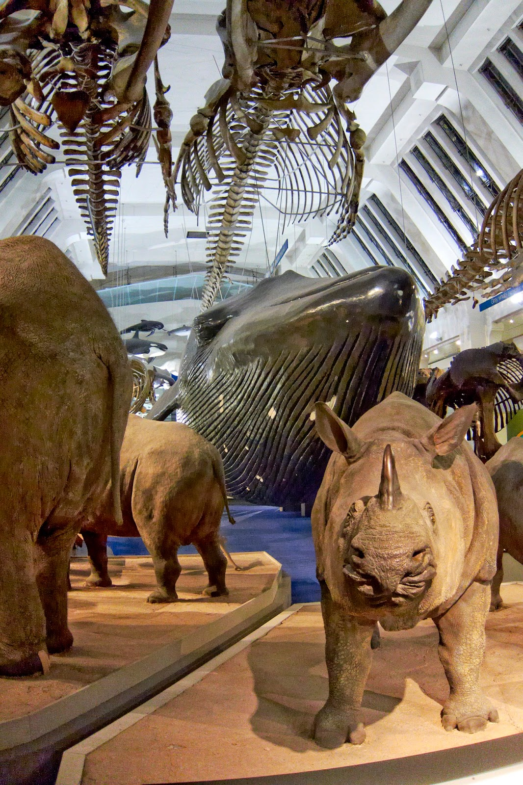 Natural History Museum Dinosnores for Grown-Ups