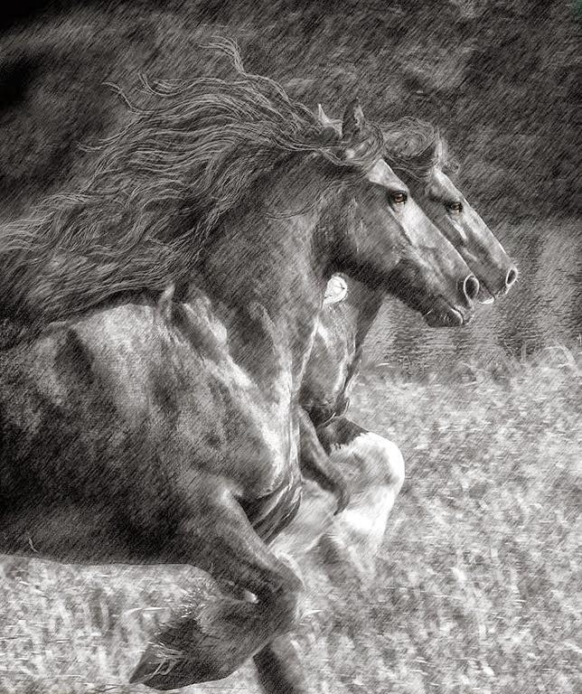 imagenes de fotografias-de-caballos-finos