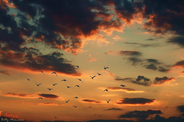 orange clouds birds and sunset