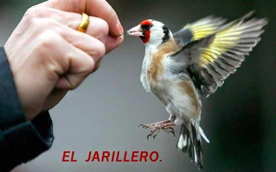 EL JARILLERO