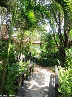 Poppies, Chaweng, Koh Samui, garden