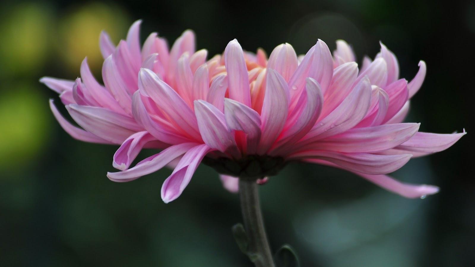 http://2.bp.blogspot.com/-DexonE5eokE/T0KLBpVD8zI/AAAAAAAAA0A/w8KD6LvWFxM/s1600/Floral+HD+wallpaper.jpg
